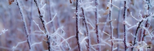 frostedraspberrycanes