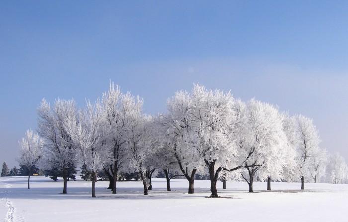 Park Trees Hoarfrost
