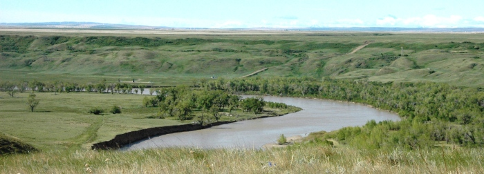 Cottonwoods growing along the Oldman River, southern Alberta (photo: S Boon)